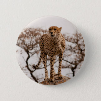 Top of the World Pinback Button
