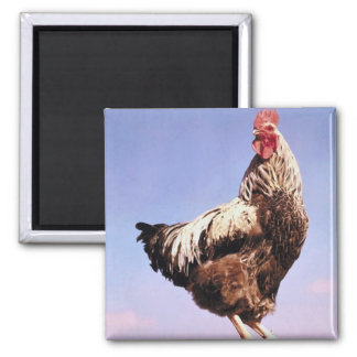 Top Rooster Magnets