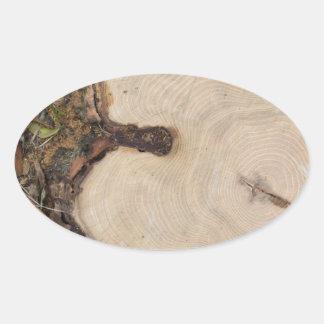 Top view of a big cut tree oval sticker