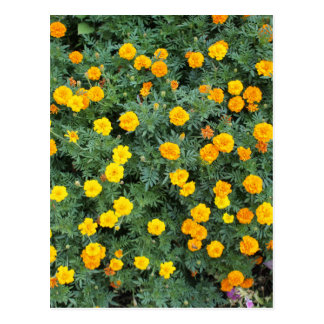 Top view of a big flower bed of yellow flowers postcard
