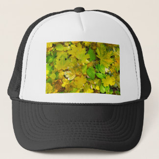 Top view of a bright yellow and green leaves on th trucker hat