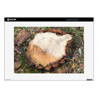 Top view of a fresh cut tree stump on the forest laptop skin