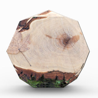 Top view of a fresh tree stump from felled maple acrylic award