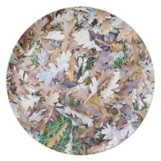 Top view of a layer of fallen oak leaves dinner plate