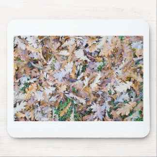 Top view of a layer of fallen oak leaves mouse pad