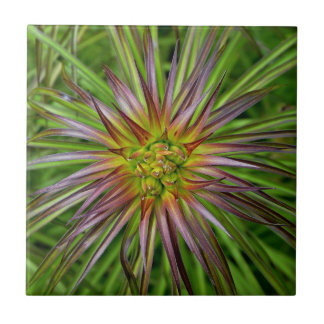 Top View of a Lilium Regale Lily Flower Ceramic Tile