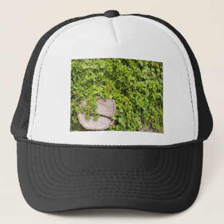Top view of a tree stump closeup on a bed trucker hat