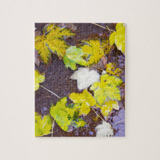 Top view of a wet autumn maple leaves closeup jigsaw puzzle