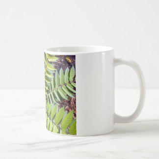 Top view of a young sapling tree Ailanthus altissi Classic White Coffee Mug