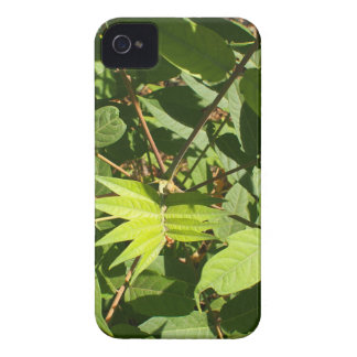 Top view of a young sapling tree Ailanthus altissi iPhone 4 Case