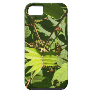 Top view of a young sapling tree Ailanthus altissi iPhone SE/5/5s Case