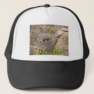 Top view of an old stump of cut tree cracked trucker hat