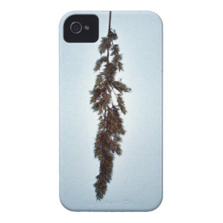 Top view of green and grey fern plant iPhone 4 cases