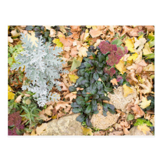 Top view of the autumn flowerbed postcard