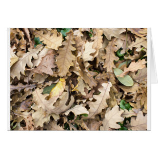 Top view of the fallen oak leaves closeup card