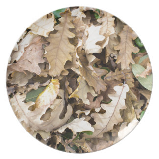 Top view of the fallen oak leaves closeup dinner plate