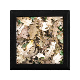 Top view of the fallen oak leaves closeup jewelry box