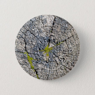Top view of the texture of an old wooden stump pinback button