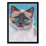 Topaz - postal del gato de Ragdoll del punto del s