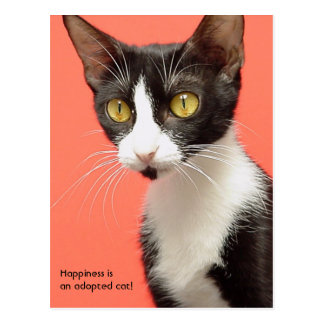 Topenga - Happiness is an adopted cat! Postcard