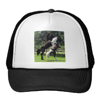 TopHatFriesians.com Hat