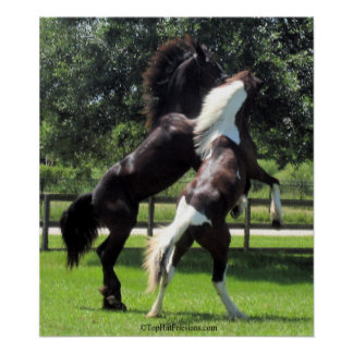 TopHatFriesians.com Posters