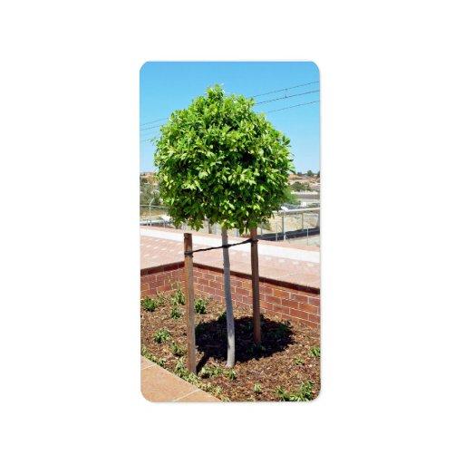 Topiary al aire libre en plantador del ladrillo etiquetas de dirección