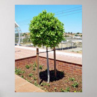 Topiary al aire libre en plantador del ladrillo impresiones