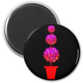 Topiary de la margarita en rosas imán para frigorifico