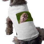 topo a disposición contra grass.jpg camisa de mascota