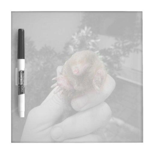 Topo vivo a disposición bw.jpg colorized sonriente pizarra blanca