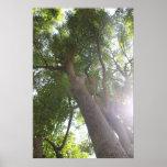 Tops del árbol impresiones