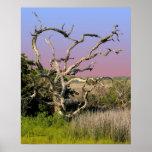 Topsail Island Beach Tree Poster