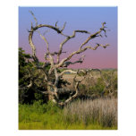 Topsail Island Beach Tree Posters