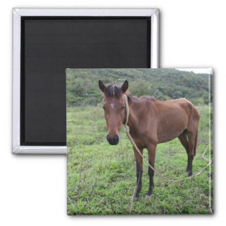 Toraille8 2 Inch Square Magnet