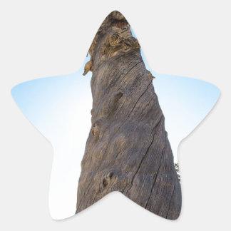 Torcer el árbol pegatina en forma de estrella