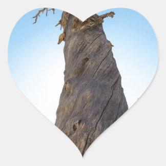 Torcer el árbol pegatina en forma de corazón