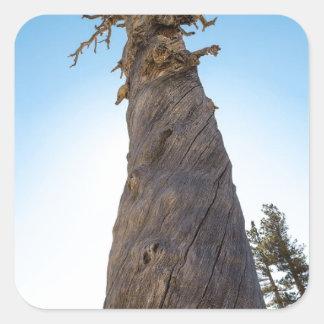 Torcer el árbol pegatina cuadrada
