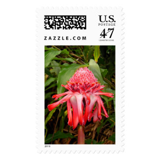 Torch Ginger with Gold Dust Gecko Postage