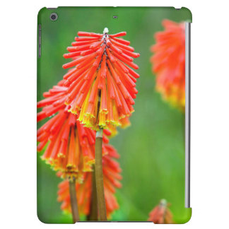 Torch Lily (Kniphofia Uvaria), Western Cape iPad Air Cover