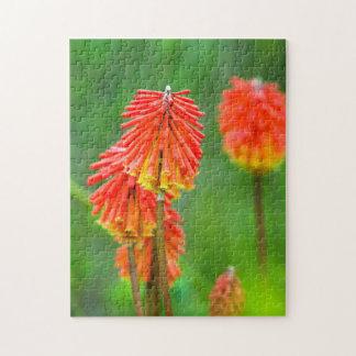 Torch Lily (Kniphofia Uvaria), Western Cape Jigsaw Puzzle