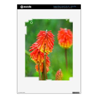 Torch Lily (Kniphofia Uvaria), Western Cape iPad 3 Skin