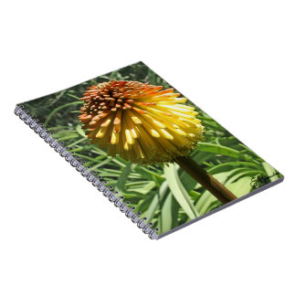 Torch Lily Notebook