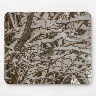 Tordo camuflado - el solitario de Townsend Tapete De Ratón