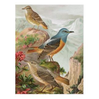 Tordo común de la roca tarjeta postal