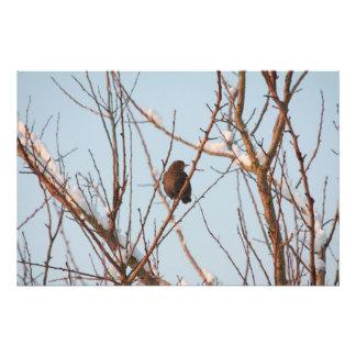tordo de canción en árbol desnudo impresión fotográfica