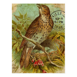Tordo del vintage tarjeta postal