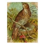 Tordo del vintage tarjetas postales