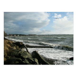 Tormenta del viento de la bahía del abedul postal