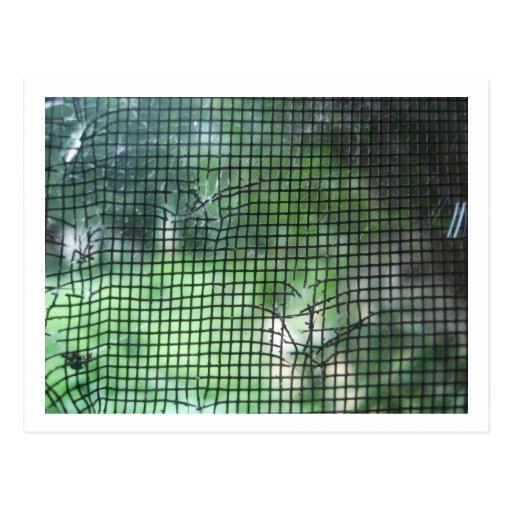 Torn Window Screen Postcards
